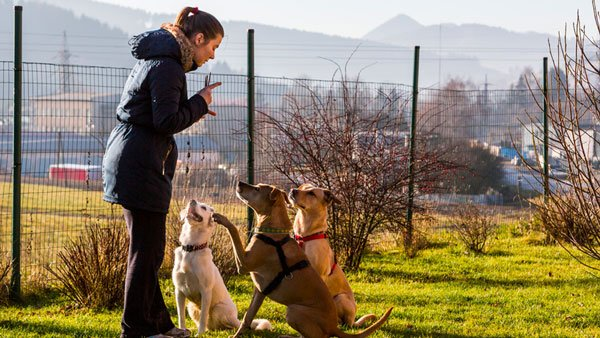 mywaggytails business dog welfare