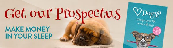 mywaggytails business get our prospectus
