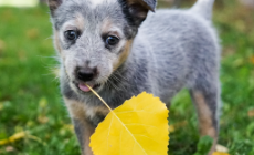 mywaggytails dog holding a leaf
